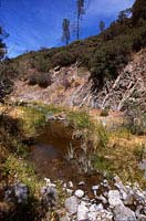 foothill yellow-legged frog habitat