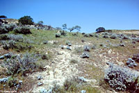 Coast Horned Lizard Habitat