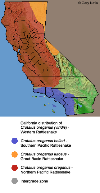 California Snakes Range Maps - Map of poisonous snakes in us